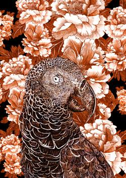 mascarene parrot paeonia aurantiaco fran