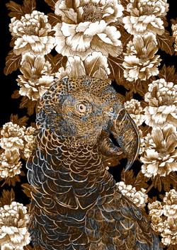 mascarene parrot AGLAOPHOTIS aurus franc