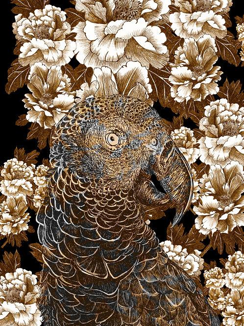 mascarene parrot AGLAOPHOTIS aurus