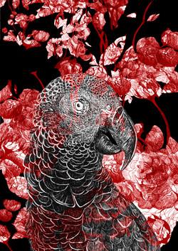 mascarene parrot paeonia rubea franck au