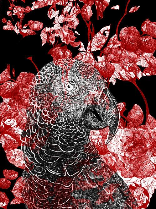 mascarene parrot paeonia rubea