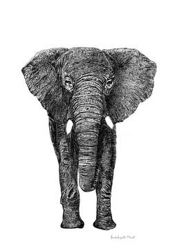 encre elephantus franck auguste pitoiset