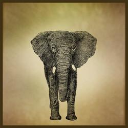 elephantus franck auguste PITOISET tous