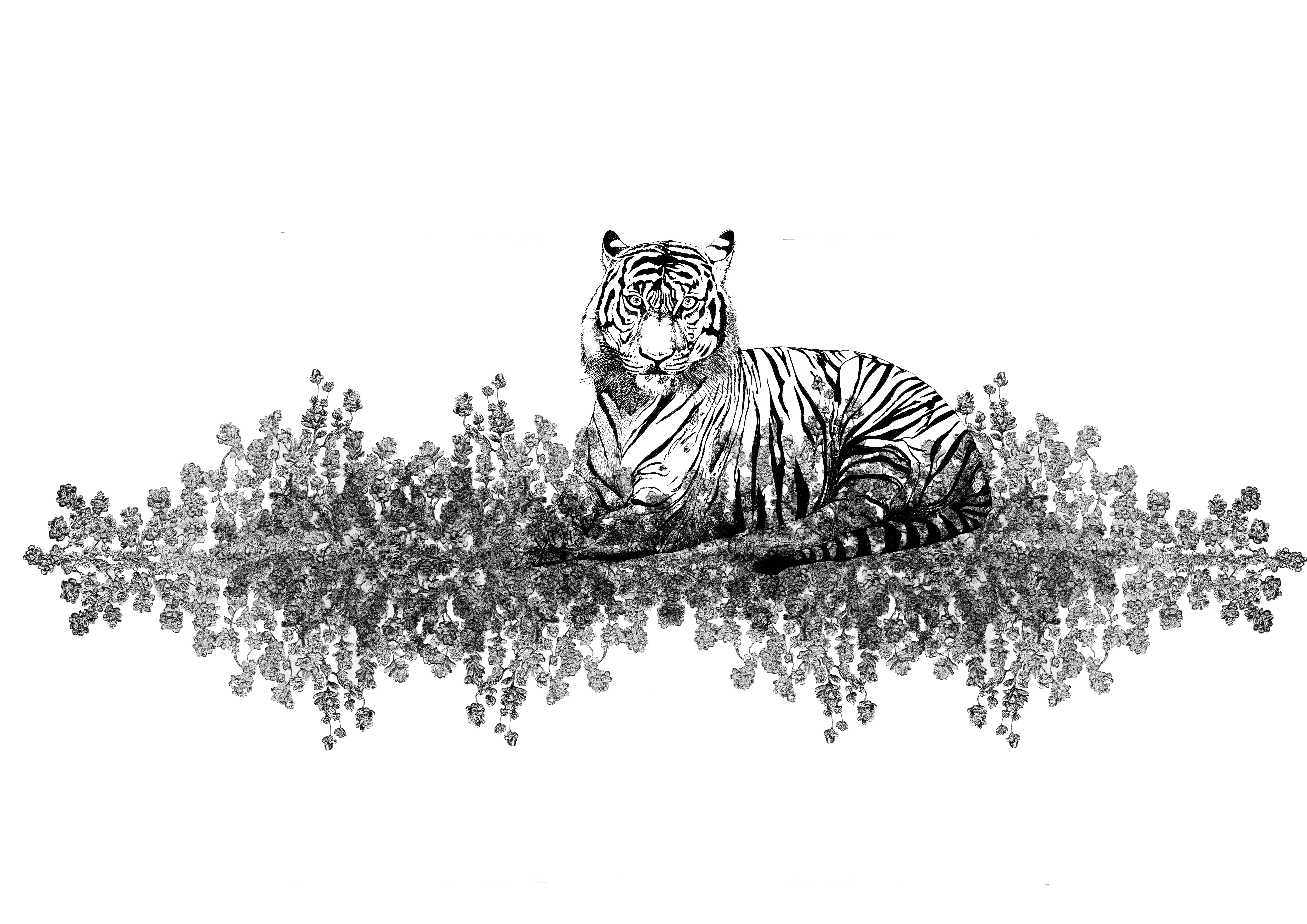 tigris bianco franck auguste pitoiset to