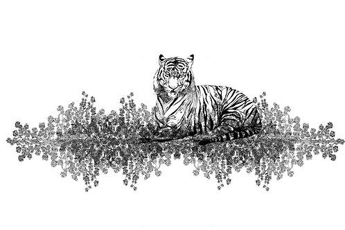 tigris bianco