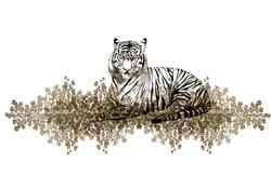 tigris  aureuss franck auguste pitoiset