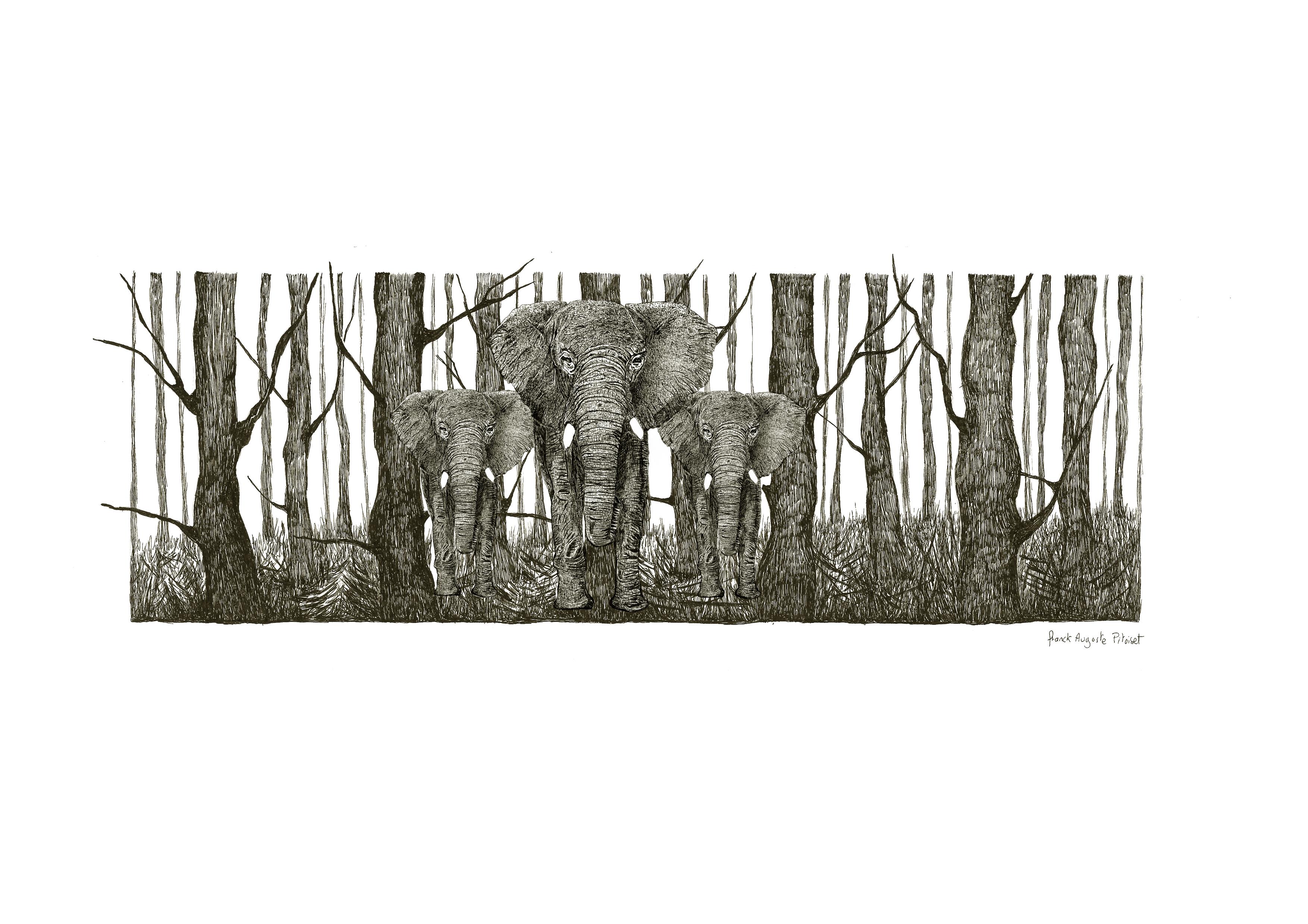 encre elephantus coronare franck auguste
