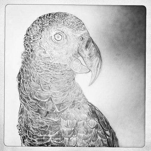 mascarene parrot carré negacio