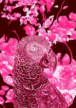 mascarene parrot AGLAOPHOTIS purpura fra