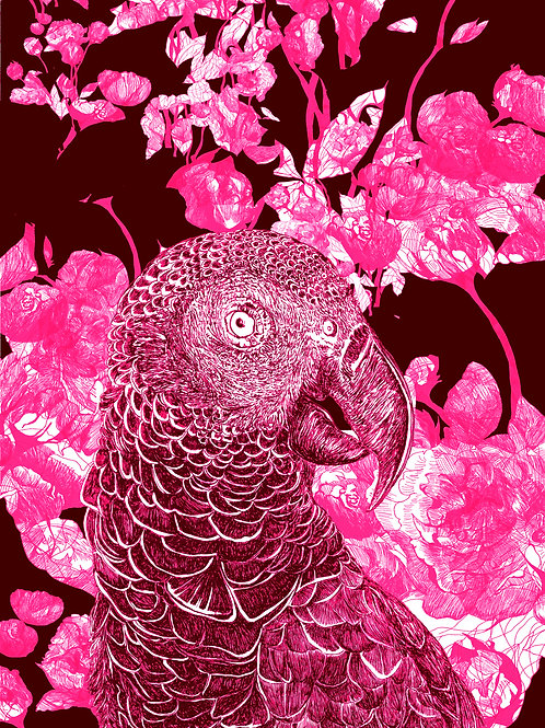 mascarene parrot AGLAOPHOTIS purpura