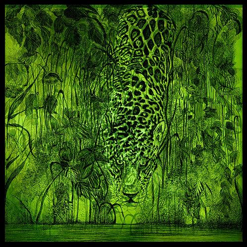 Acinonyx jubatus opimae viridis