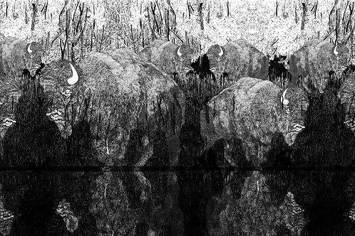 bisontes excellentique coronare