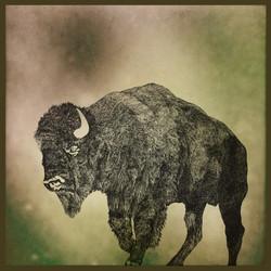 bisontes excellentique franck auguste PI