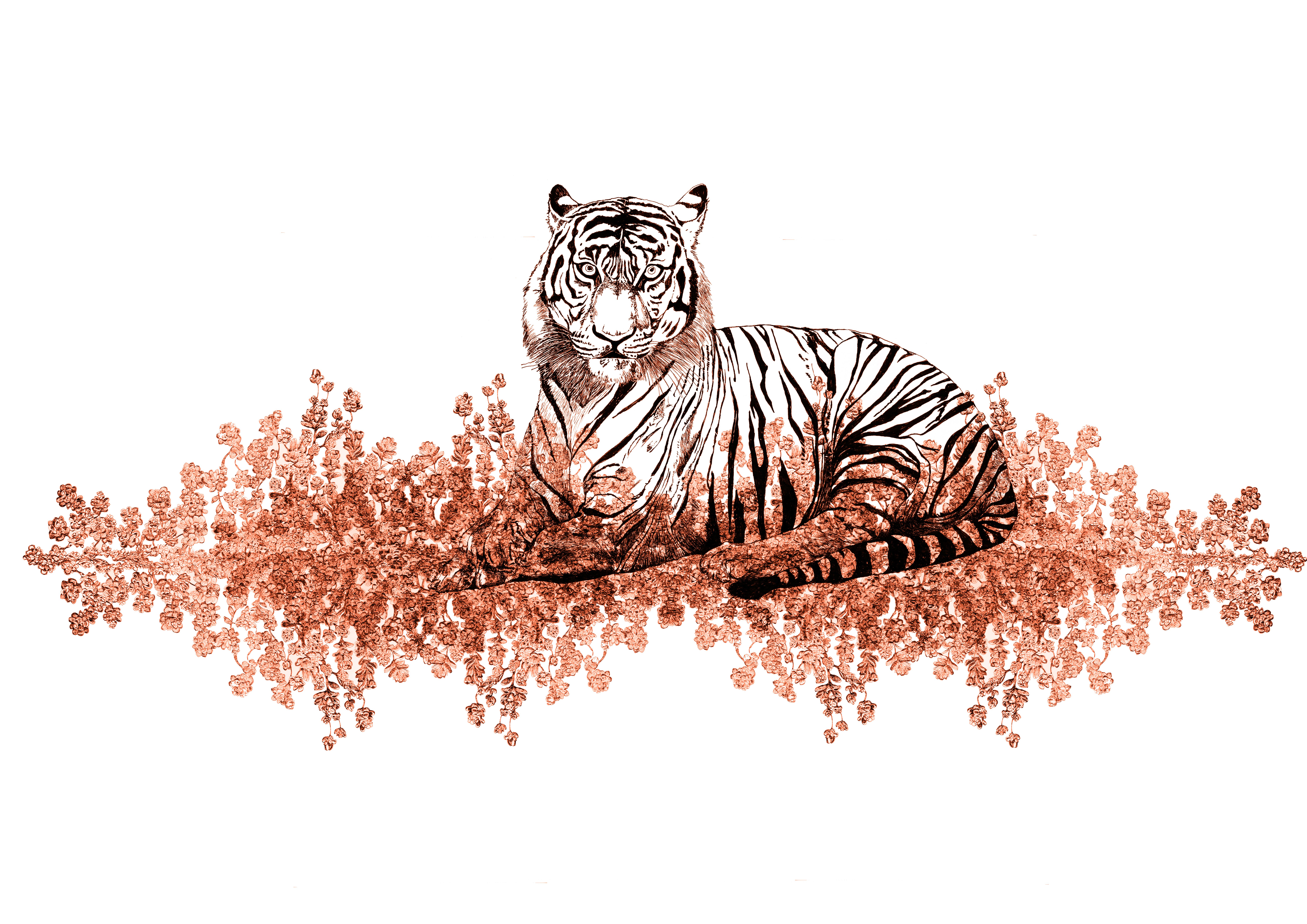 tigris aureus coronare franck auguste pi