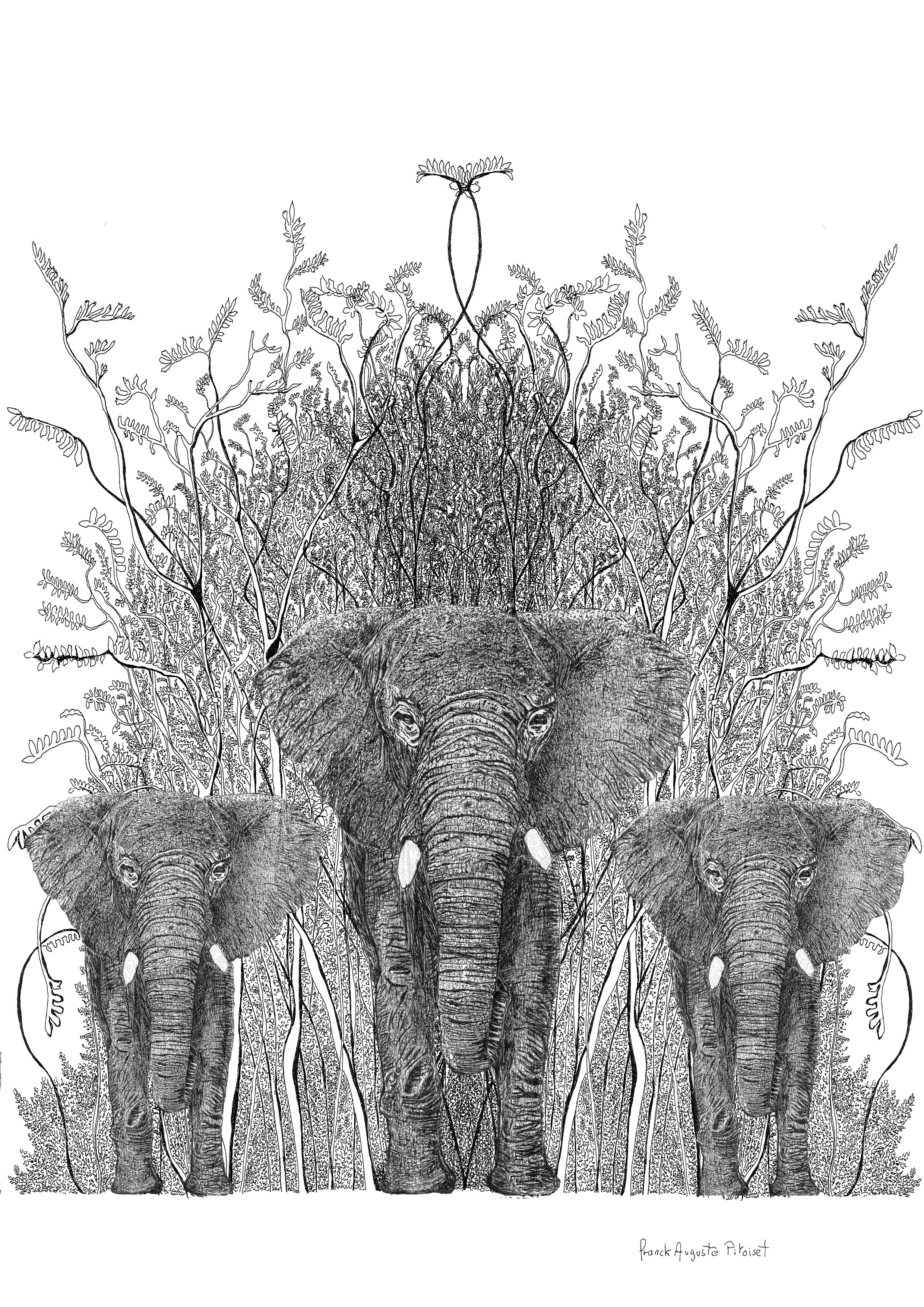 encre elephantus nero franck auguste pit