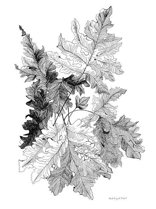 filicophytes