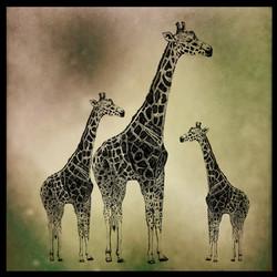 giraffa franck auguste PITOISET tous dro