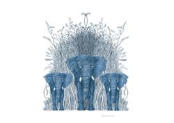 encre elephantus coronare azur franck au