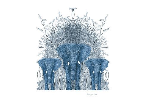 encre elephantus coronare azur
