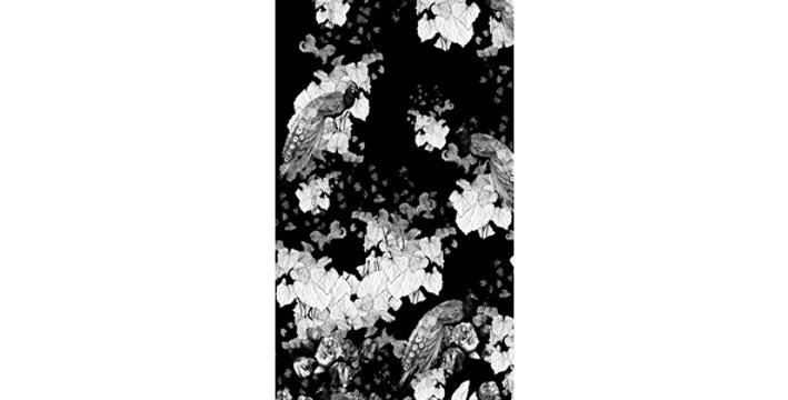 Paeonia niger