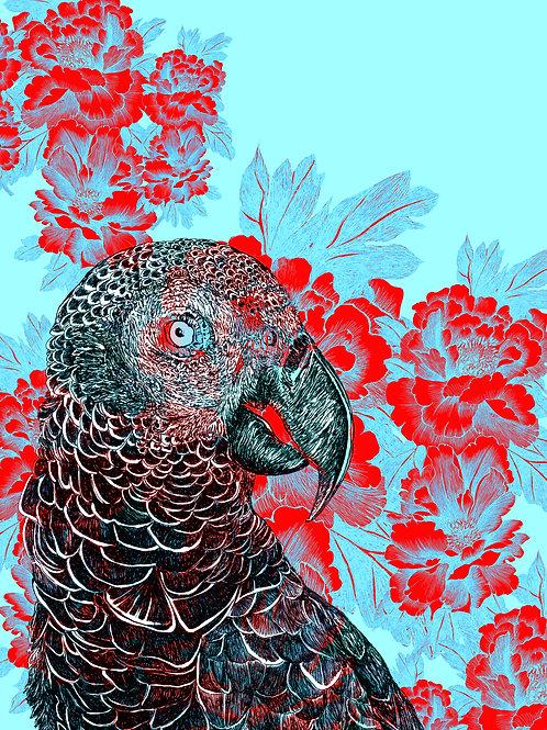 mascarene parrot AGLAOPHOTIS cyanus