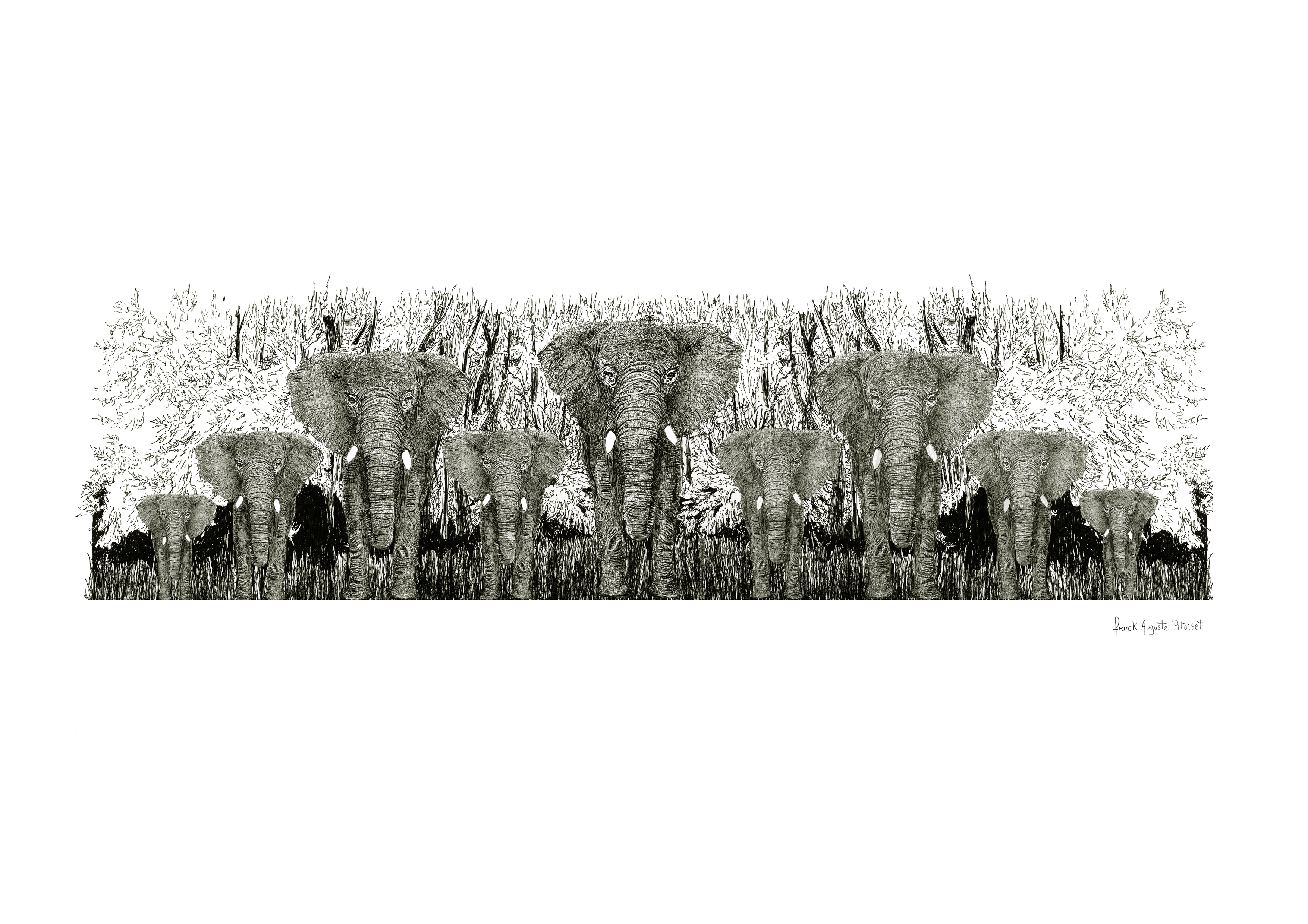 encre elephantus coronarenero viridis fr