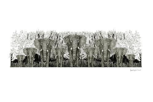 encre elephantus coronare nero viridis