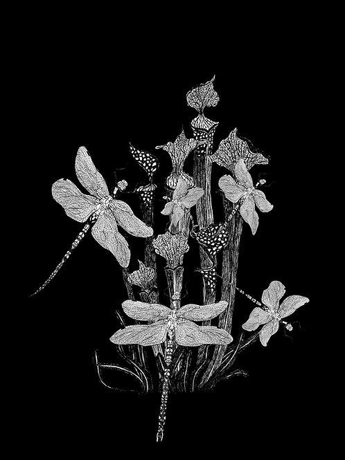 cordulie exultant lusibus nero