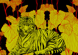 tigris glbinus franck auguste pitoiset t