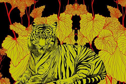tigris glbinus