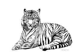 tigris franck Auguste PITOISET tous droi