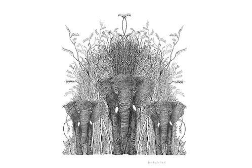encre elephantus bianco
