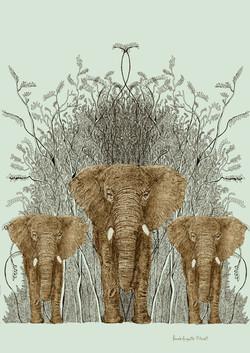 encre elephantus vridis franck auguste p