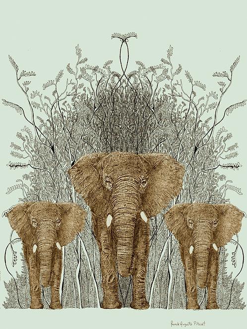 encre elephantus vridis