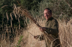 Paul harvesting at El Chabolino