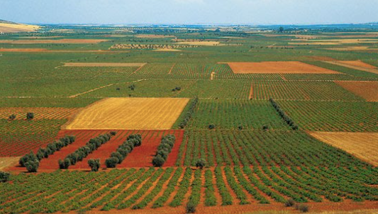 Vineyards in Castilla La Mancha - the largest wine region in the world