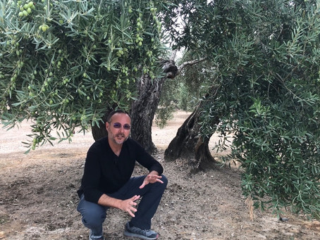 Spain's liquid gold: olive oil adventures with Lucas Soler - When in Spain podcast episode 95