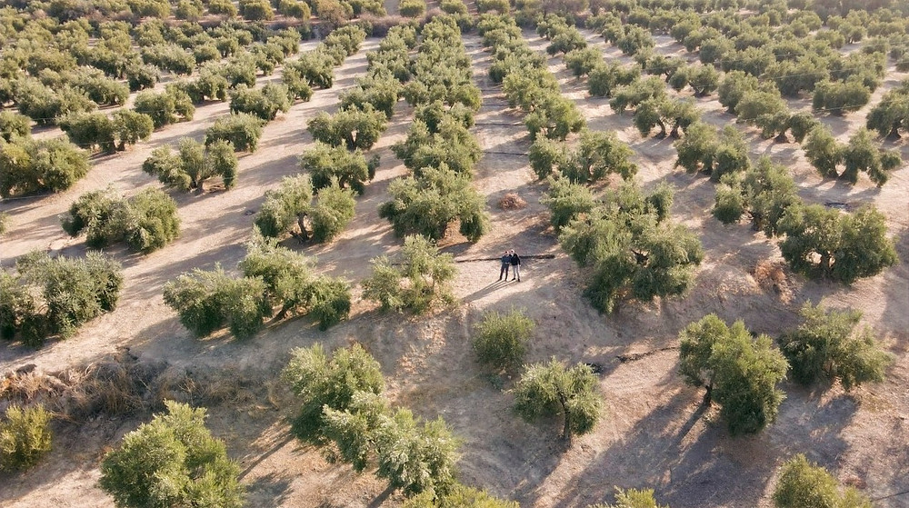 Lucas Soler among the olive groves of Jaén