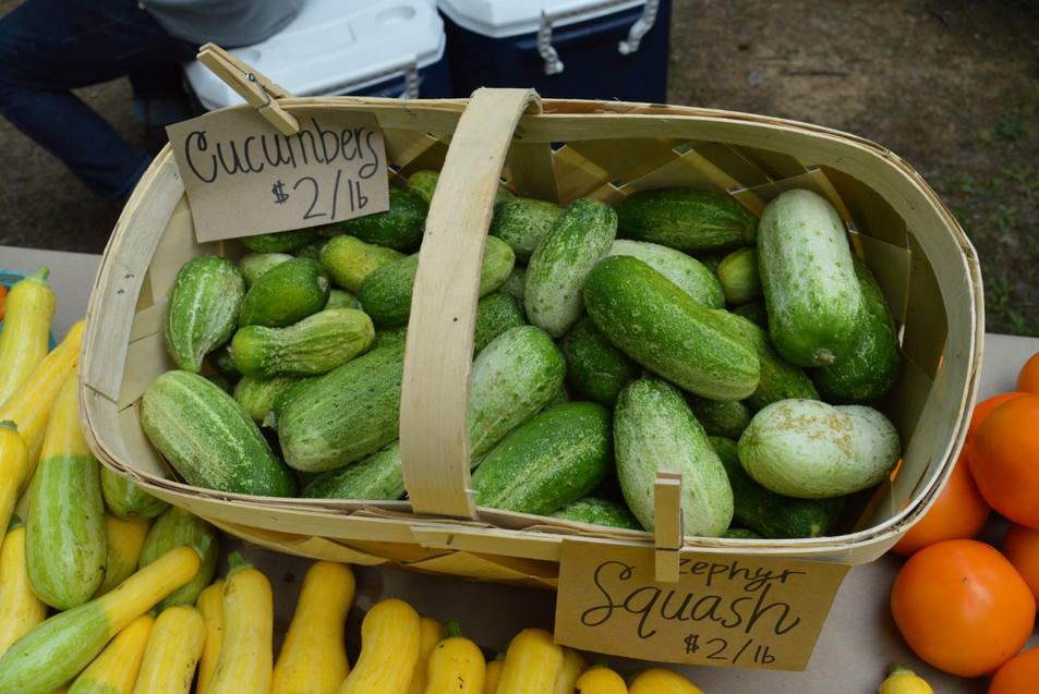Cucumbers for Sale