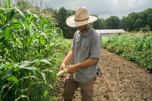 Brent in the Corn Field