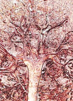 Placenta©TreeOfLife