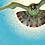 Thumbnail: La passerotta capricciosa
