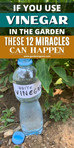 If You Use Vinegar in the Garden These 12 Miracles Can Happen by Linda Parker