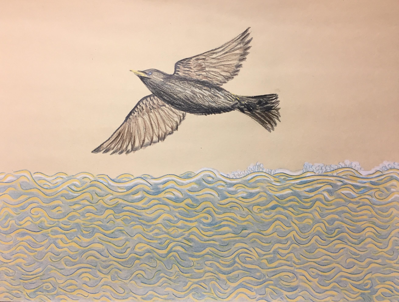 Coney Island Starling, 2020