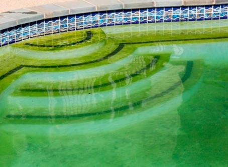 Скользкий налет на стенках и дне бассейна.