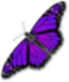 Purple-Butterfly-Transparent-PNG.png