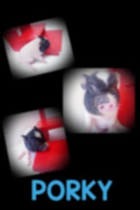 Collage+2020-01-17+13_58_29.jpg