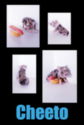 Collage 2019-06-29 00_50_41.jpg