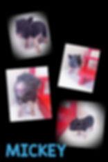 Collage+2020-01-17+13_51_52.jpg