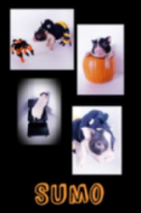 Collage+2019-10-23+23_55_41.jpg